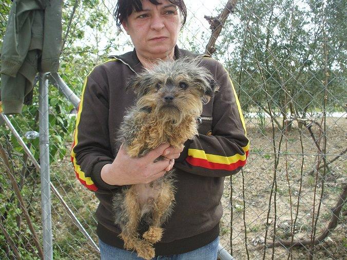 39 perros de Priego (Córdoba)