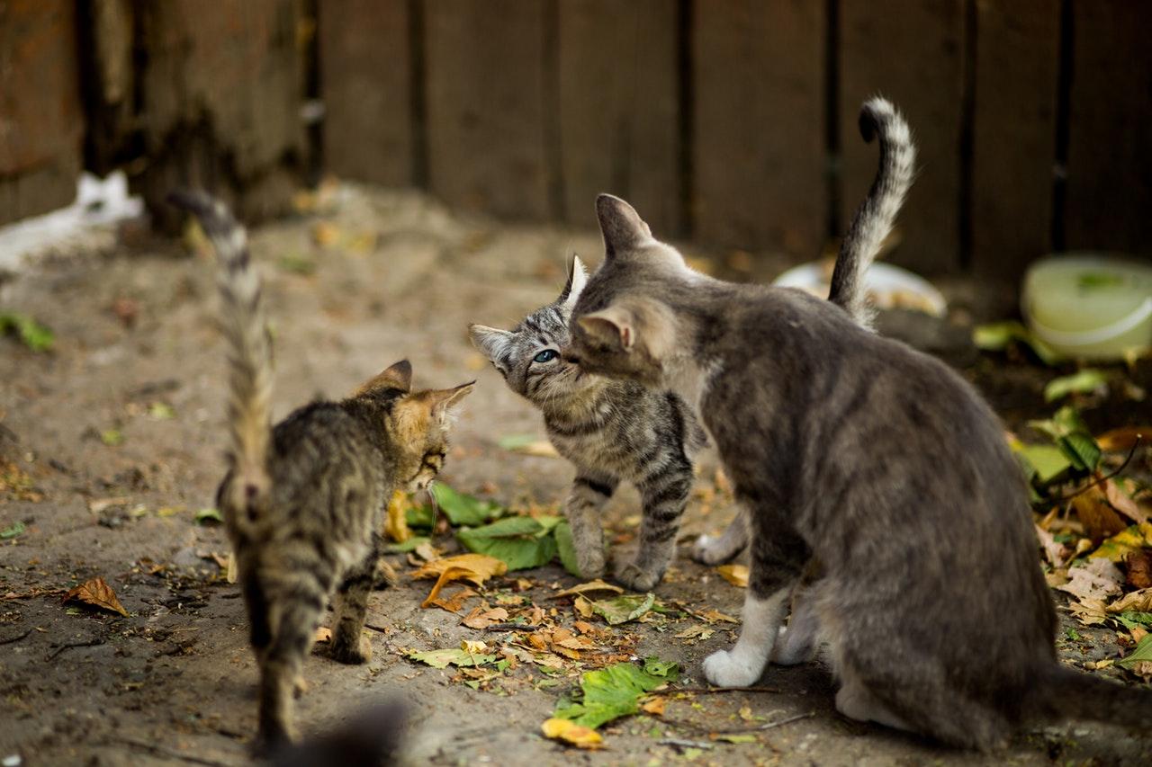 El marketplace Mascoteros.com recaudará fondos en Facebook durante un mes para alimentar a las colonias felinas