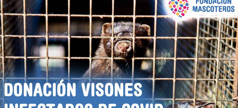 Fundación Mascoteros aporta los 600€ de fianza para la querella por la muerte de los 92.000 visones